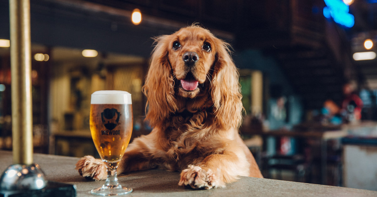 Can dogs join your BEER PARTY?