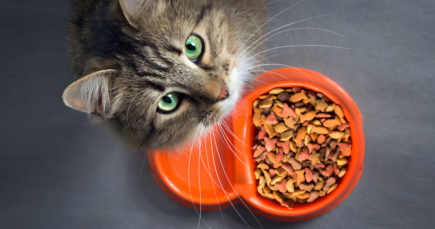 Should I Feed My Cat Raw or Cooked Food?