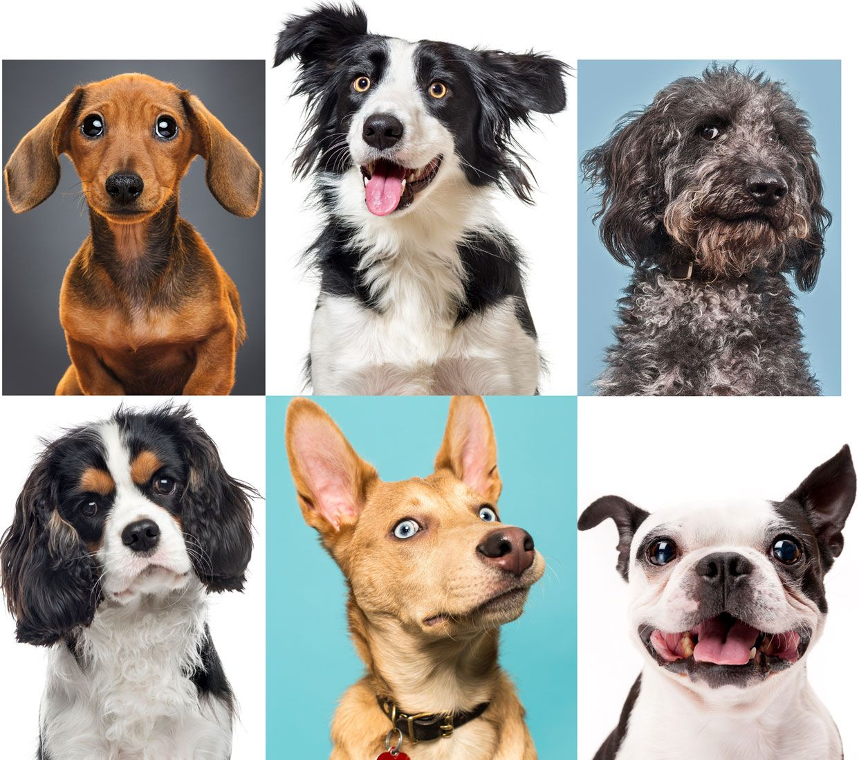 How to Understand Dogs' Emotions?