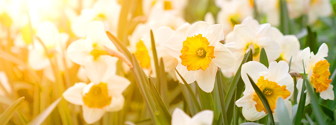 Fall-planted Bulbs for Spring Blooms