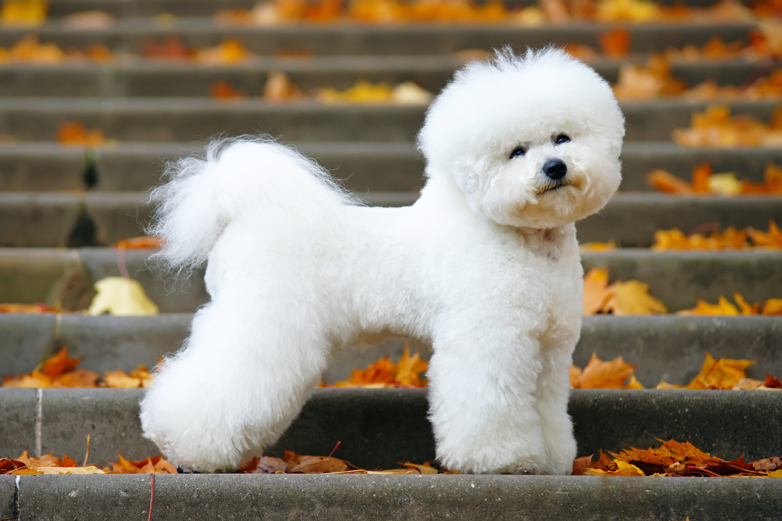 Best Dog Breed for Apartment Living