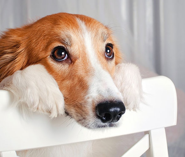 Guidelines of Pet Insurance
