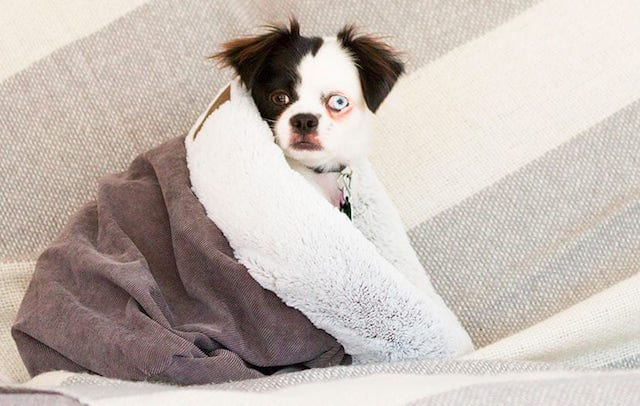 Does Your Dog Like to Dig A Hole in Bed?